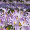 Garten  Pflanzen Blumen Gartenbetriebe Gärtnereien Pflanzenshops Baumschulen Bilder  Botanik