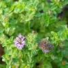 Garten Pflanzen Blumen Gartenbetriebe Gärtnereien Baumschulen Bilder Botanik