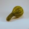 Cucurbita pepo -- Zierkürbis